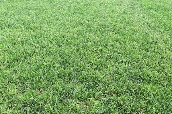 Рулонный газон «Стандартный»