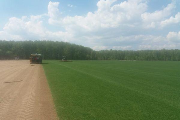 Рулонные газоны нового сезона