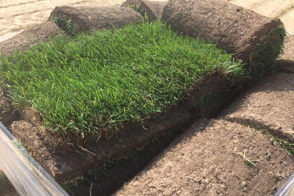 Нарезанный газон на рулоны