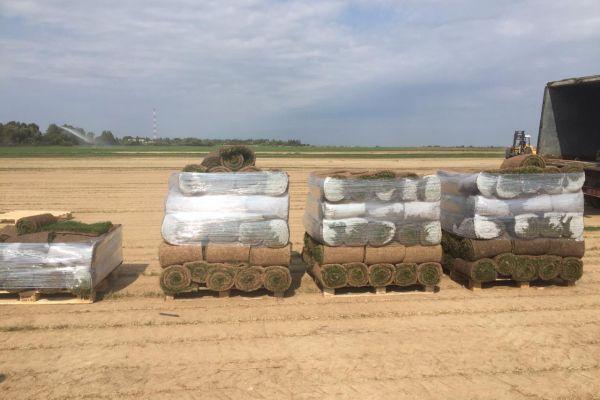 Рулонный газон готовится к доставке