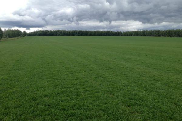 Рулонный газон на производстве