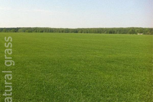 Газонное поле после покоса