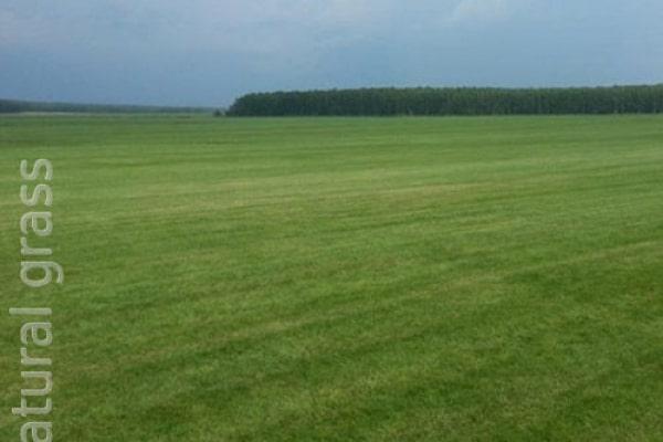 Наши газонные поля