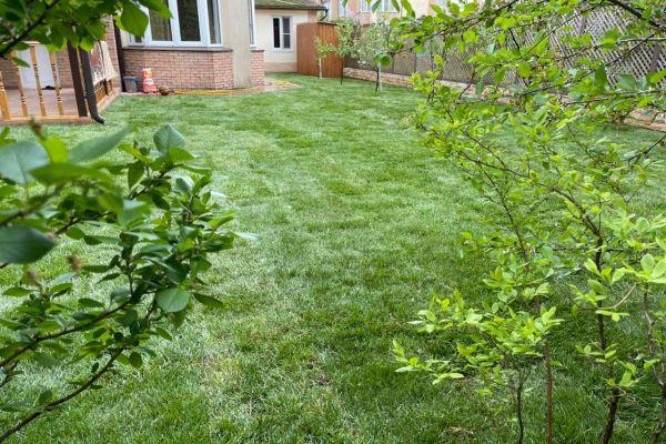 Озеленение территории газоном
