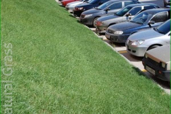 Биомат «Сухой газон»