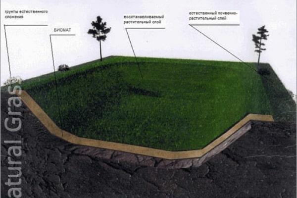 Быстрое вертикальное озеленение