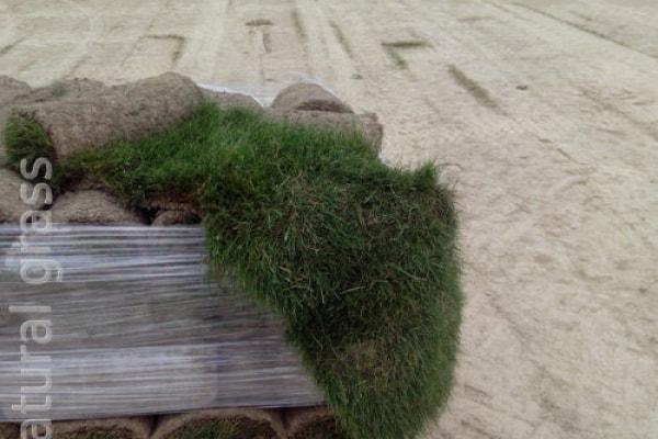 Проверка сорта газона