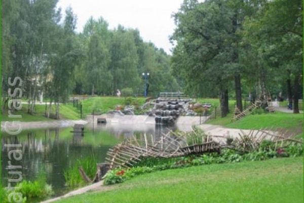 Газон в Лианозовском парке