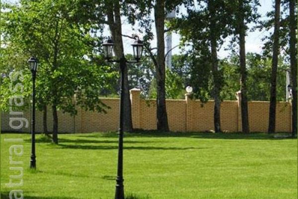 Парковый газон