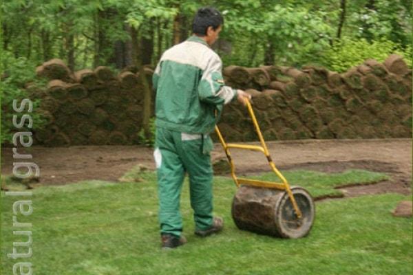 Прикатывание газона