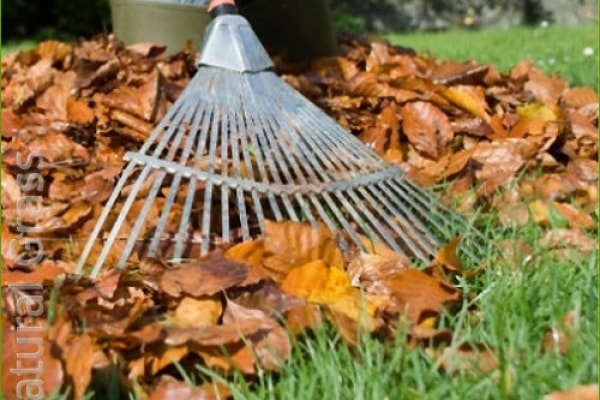 Осенний сбор листового опада