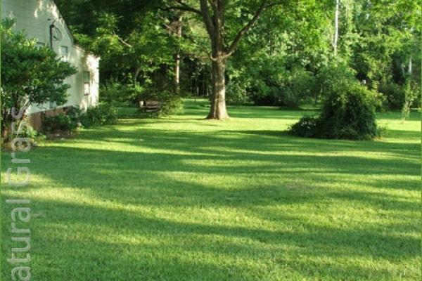 Теневой газон