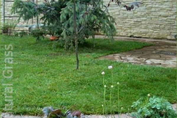 Сеянный стандартный газон