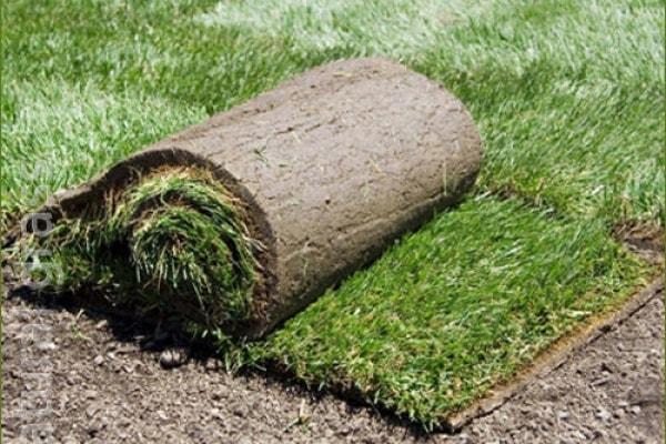 Рулон газона