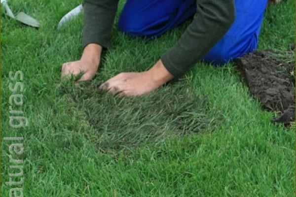Реставрация рулонного газона