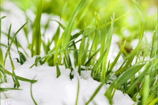 Очистка садового участка от снега